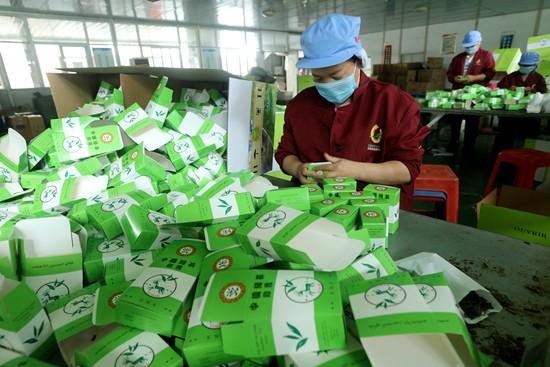 河南光山:茶叶出口创外汇富村民