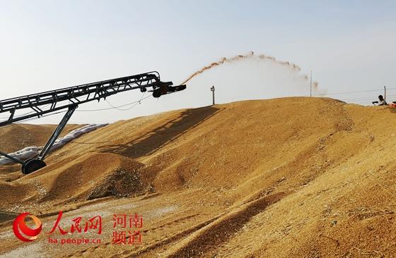 """让""""中国碗""""多盛""""河南粮""""  8600万亩小麦颗粒归仓,今年又是一个丰收年!近年来,河南粮食连年丰收,<a href="""